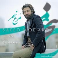 Saeed-Modarres-Morghe-Sahar