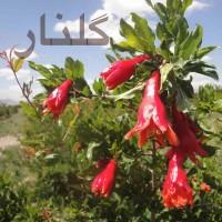 Shahram-Malekzadeh-Golnar
