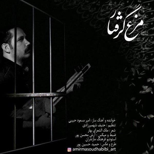 Amir Masoud Habibi - Morghe Gereftar